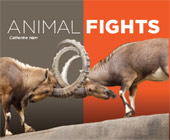 Animal Fights
